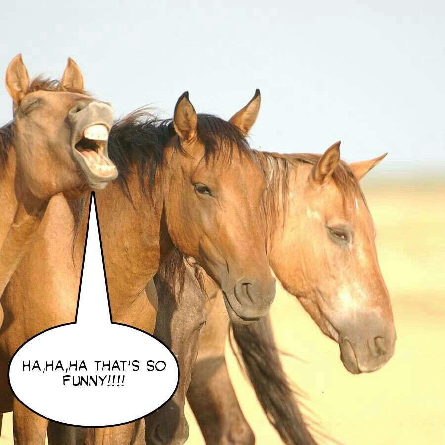 Crazy Horses Horses Haha Funny Animals