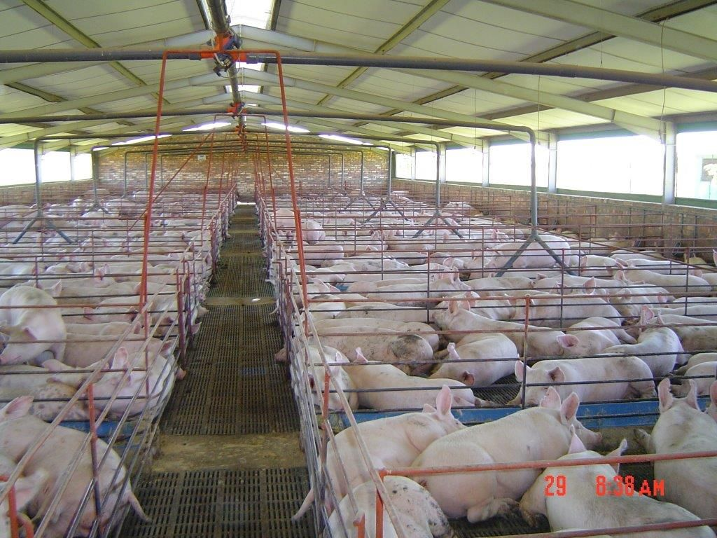 Chicken And Pig Housing Jokama Steel And Fencing in 2020