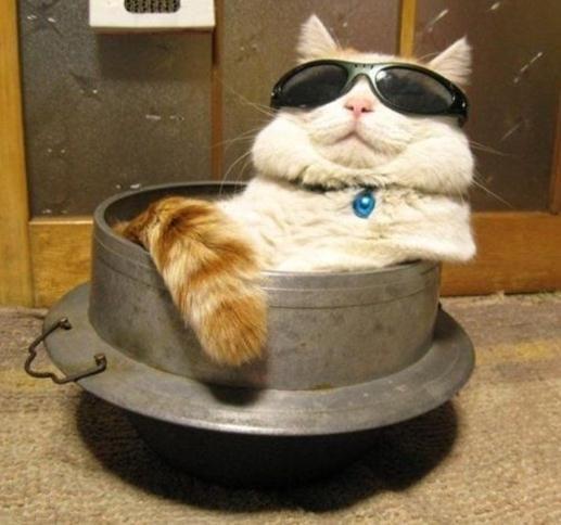 A cat in a bowl