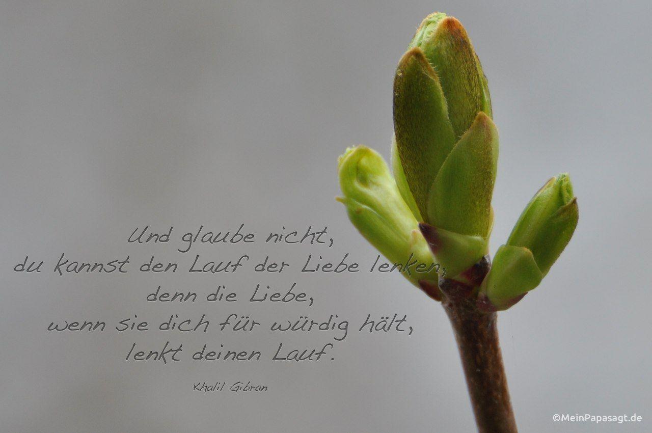 Mein Papa sagt... Und glaube nicht,du kannst den Lauf der Liebe lenken,denn die Liebe,wenn sie dich für würdig hält,lenkt deinen Lauf.Khalil Gibran  #Zitate #deutsch #quotes      Weisheiten & Zitate TÄGLICH NEU auf www.MeinPapasagt.de