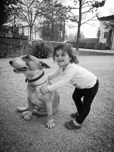 Bull Terrier A Donner
