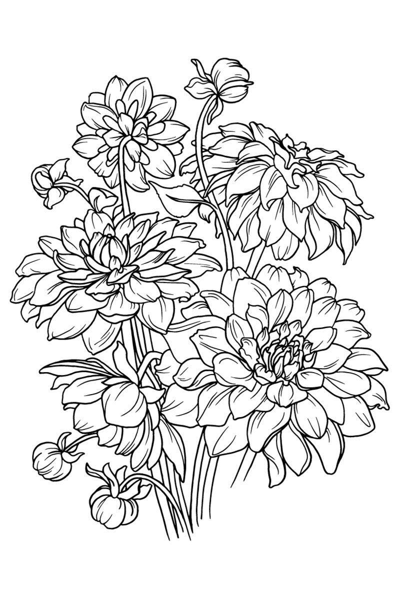 make coloring pages using photoshop | Adult Coloring Book Flowers | Flower coloring sheets ...