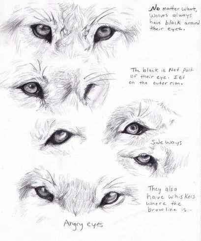 Wolf anatomy | 3D | Pinterest | Lobos, Anatomía y Animales
