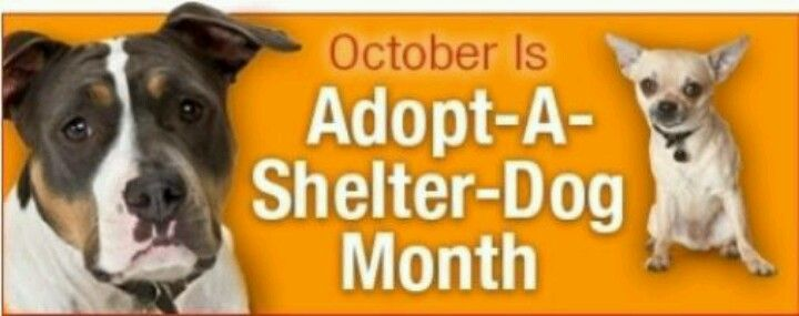 Pin by Kim Phillips on Dogs Shelter dogs, Adoption
