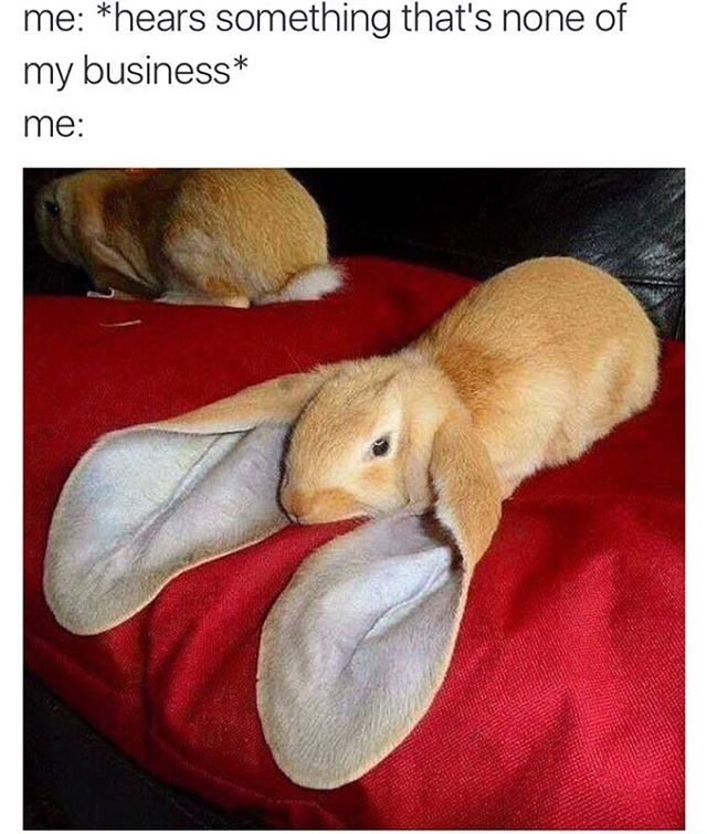 e0736352f24571cd8ac30e4ca743abcc image result for super cute baby animal memes lol