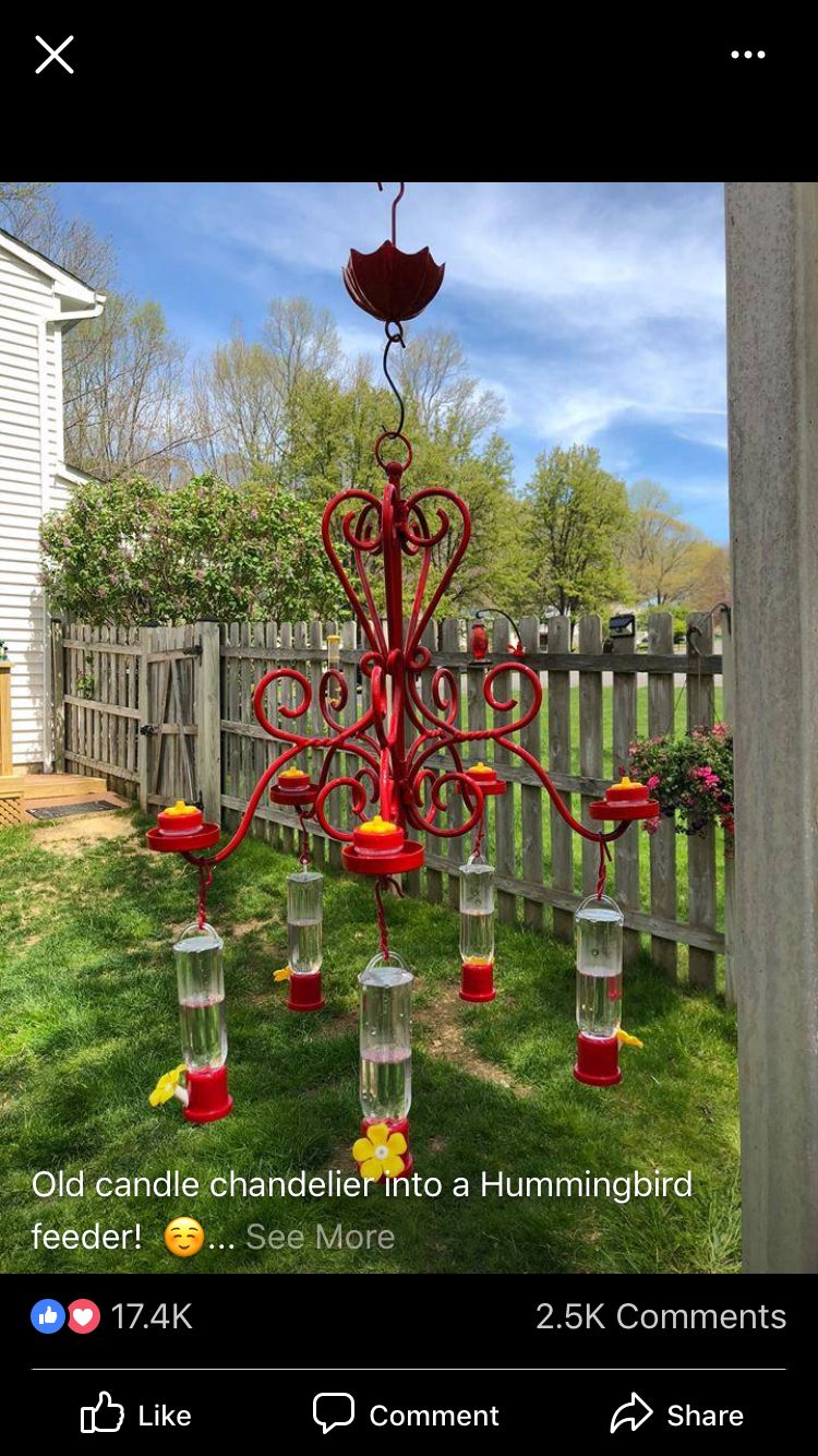 Pin by Elizabeth Jones on Outdoor Loves Humming bird