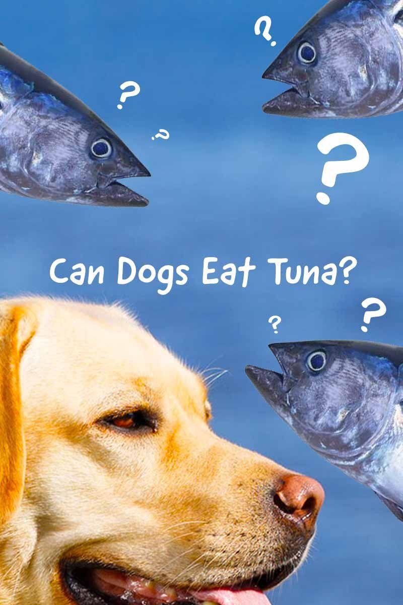 Can dogs eat, Tuna dog