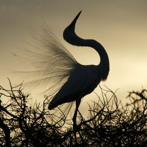 The Crane Is Considered A Messenger Of God Or A Symbol Of