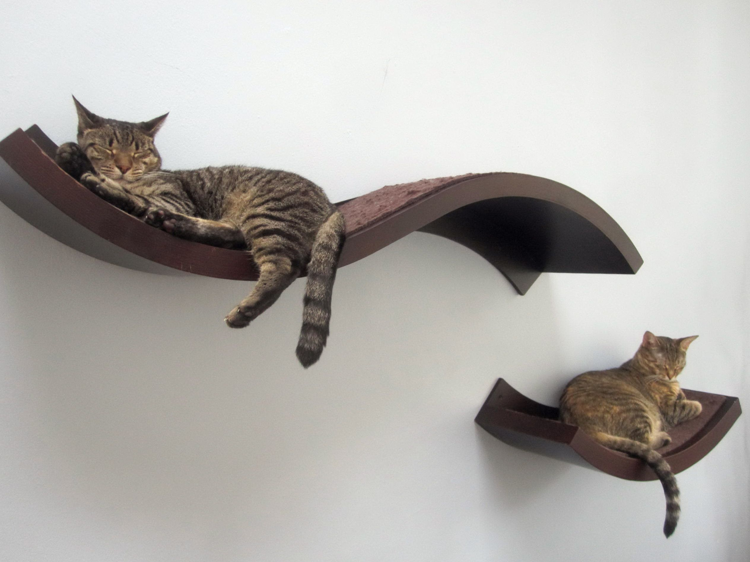 Curved Wall Shelves Best 25 Cat Wall Shelves Ideas On Pinterest Diy Cat Shelves