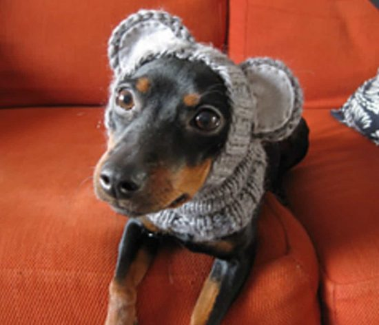 Knitted Dog Hats with Ears Easy Free Patterns   Dog ...