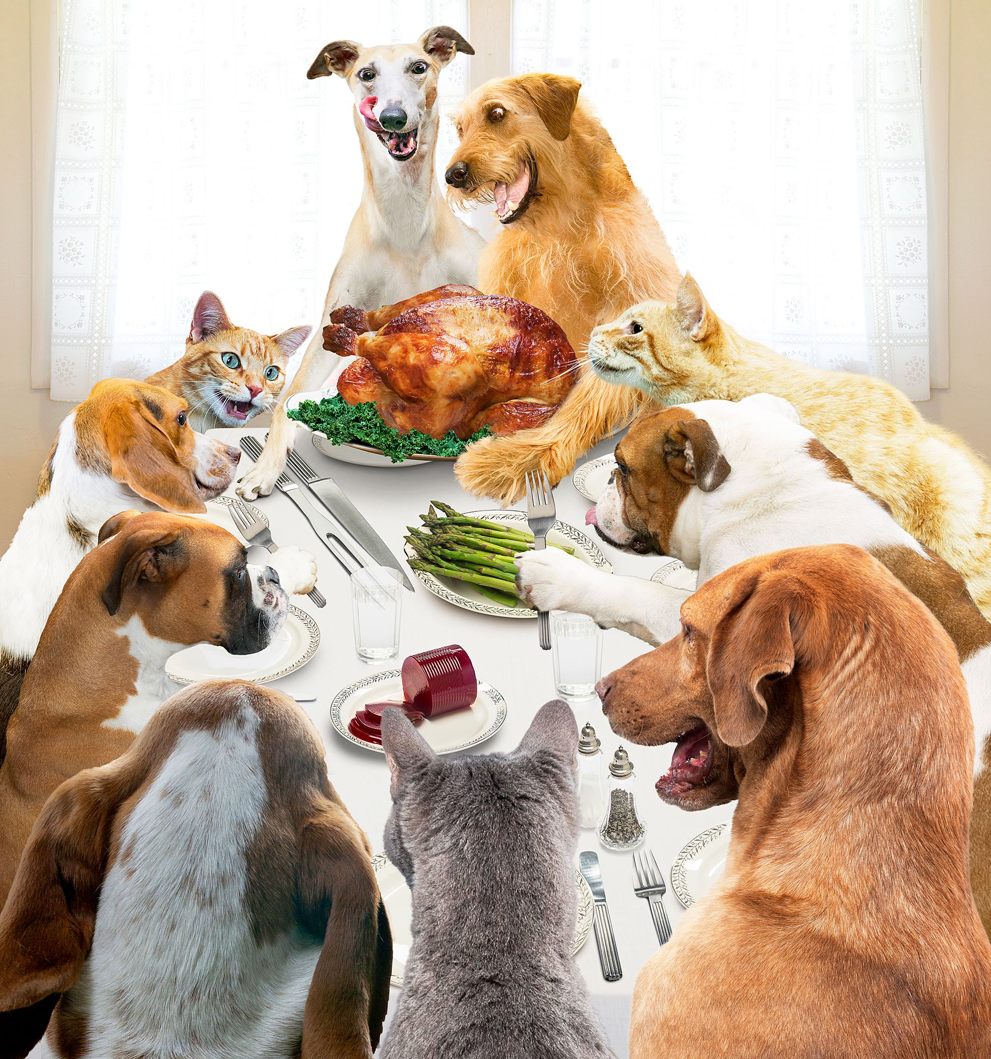 Quiz Which Thanksgiving Dishes Are Pet Safe? Dog