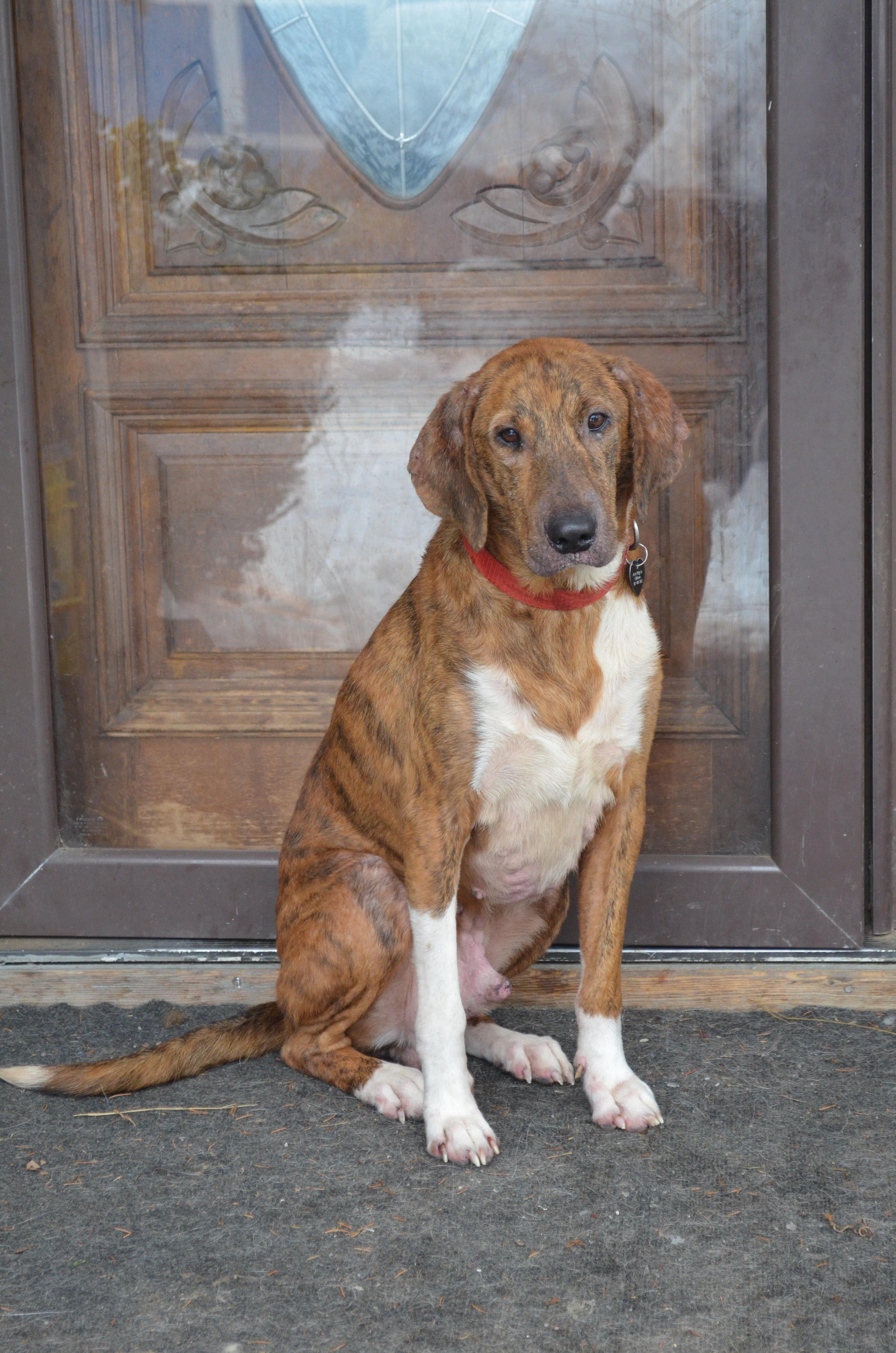 Adopt DINOZZO HAS BEEN ADOPTED on Dog love, Animal