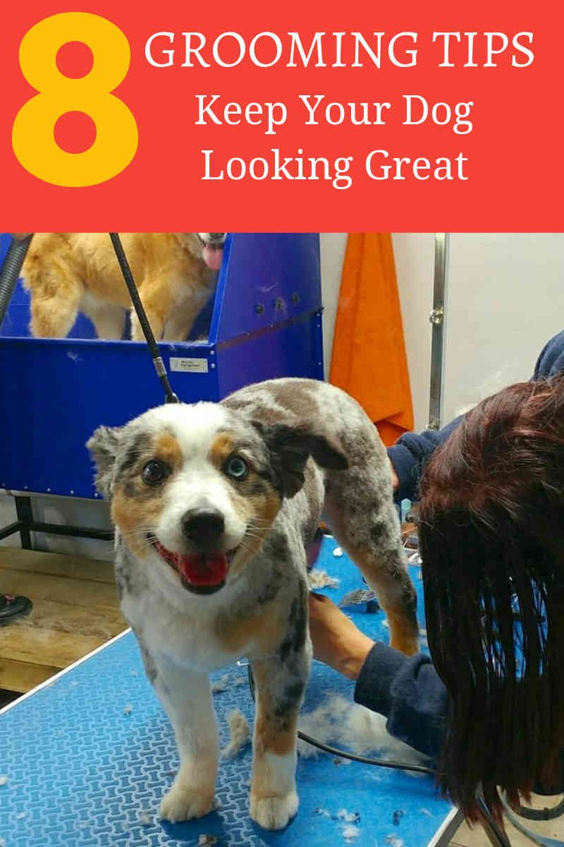 Why You Can Get More From Online Dog Grooming Courses The Dog