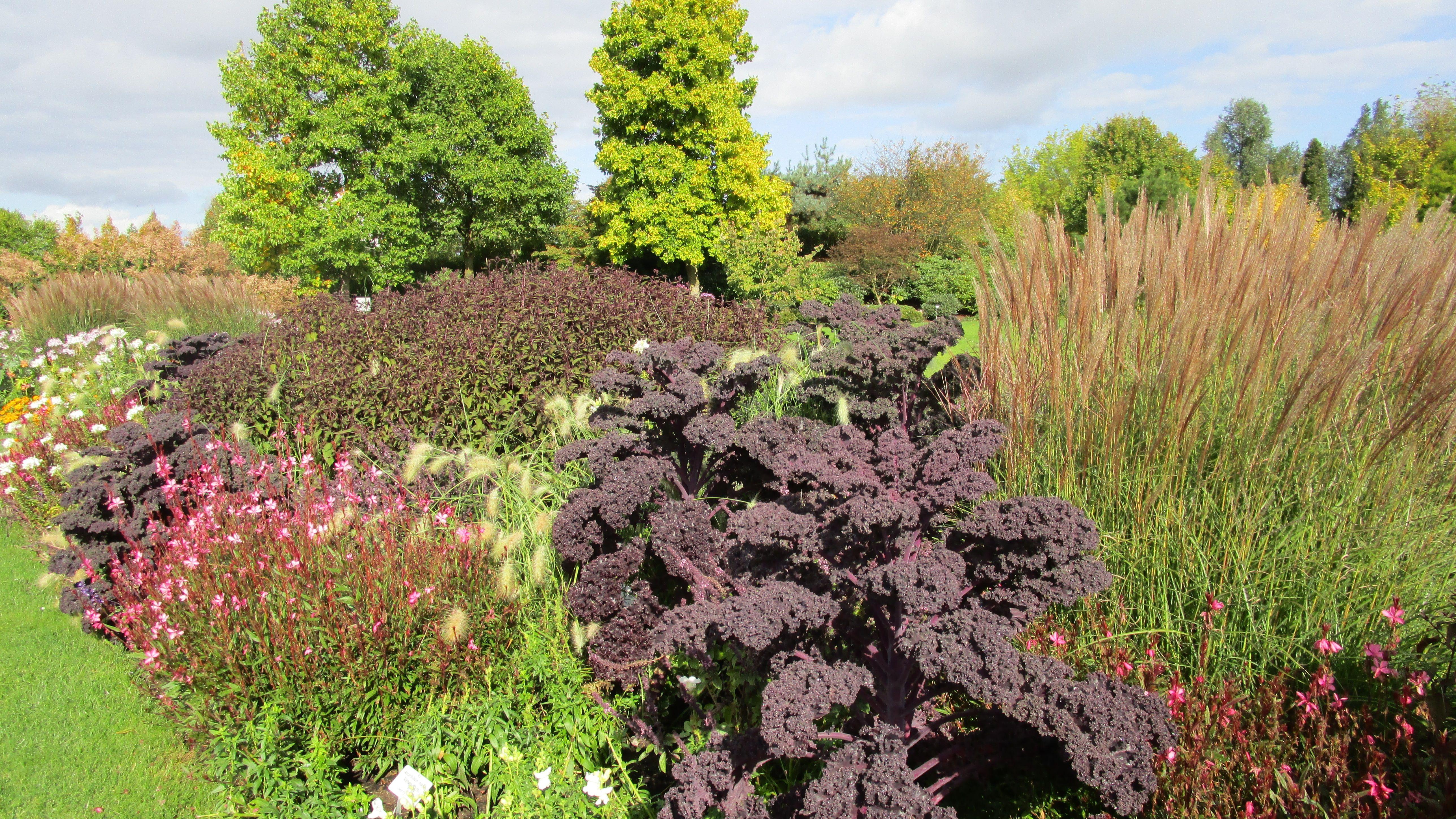 Im Park Der Garten In Bad Zwischenahn Wachst Im Herbst Roter Grunkohl Pflanzen Garten Natur