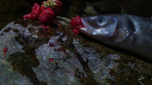 Laure Prouvost: Swallow (2013) film still, digital video © The artist and MOTINTERNATIONAL