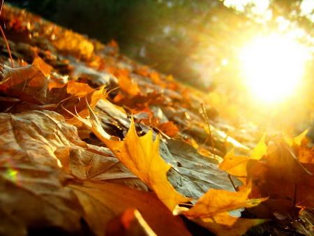 Top 25 Autumn Songs for the Changing Colors and Refreshing Breeze