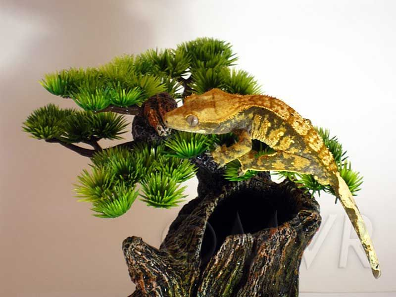 Crested Geckos - Lighting u0026 Heating & Crested Geckos - Lighting u0026 Heating | Crested Gecko Readiness ...