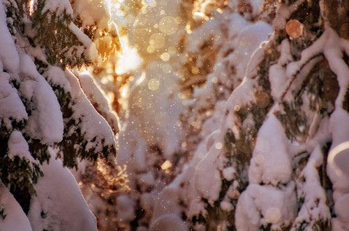 I like the sunshine against the snow, it gives a nice contrast. Winter with snow covered trees is magical and pretty.