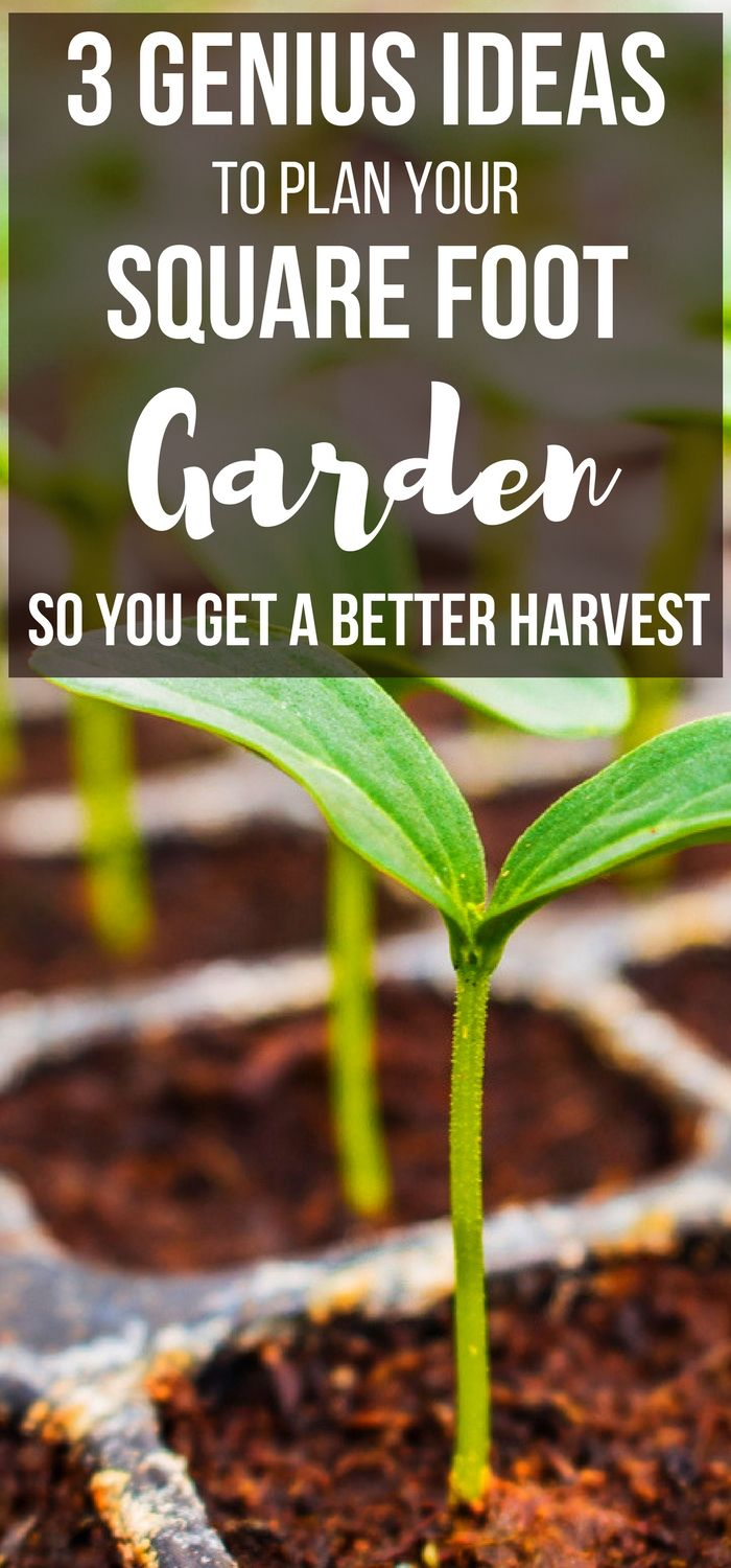 Marvelous Want An Easy Square Foot Gardening For Beginners Resource And Square Foot  Gardening Plant Spacing Ideas