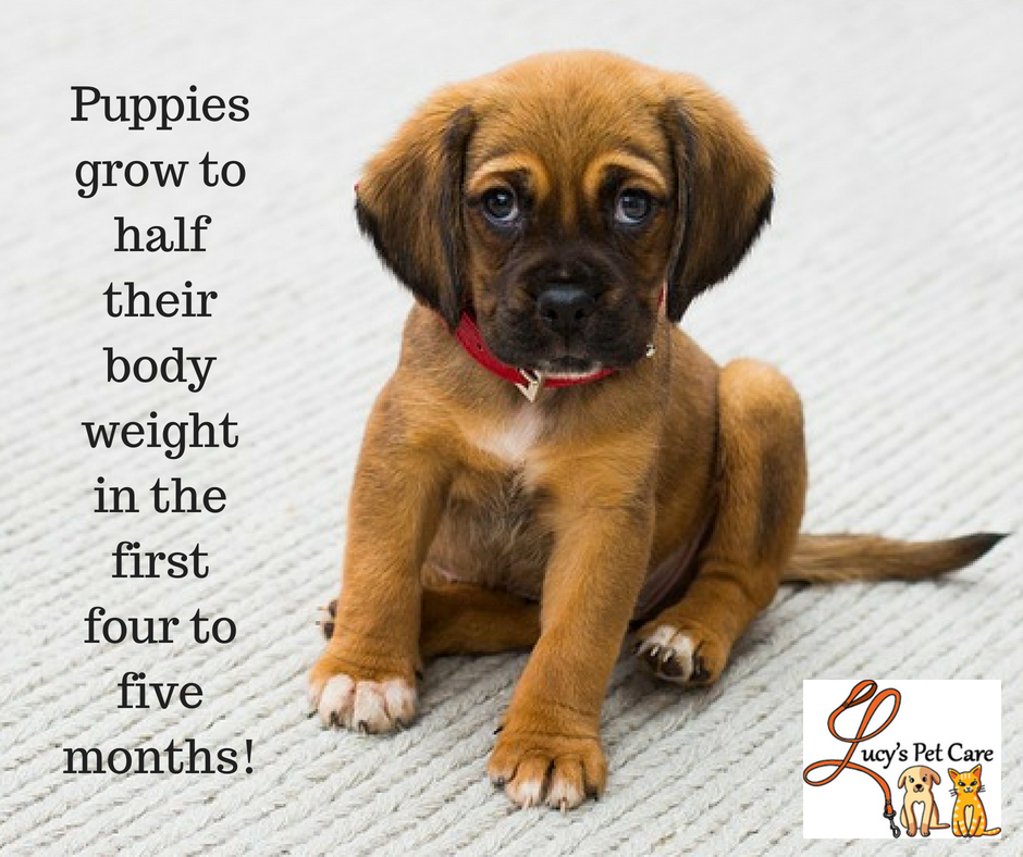 Pin by Lucy's Pet Care on Fun Pet Trivia Facts Puppy