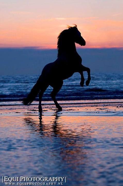 Reminds me of the book I read as a child, The Black Stallion.