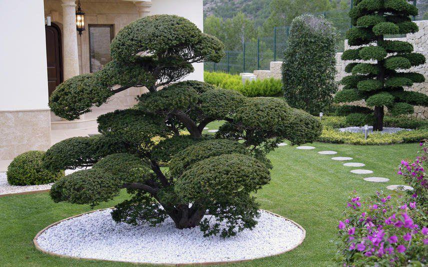 Japanische Eibe Vielseitiger Nadelbaum Asiatischer Garten Coole Baumhauser Japanischer Garten