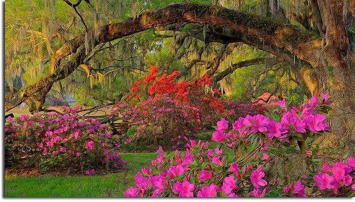 e079fab8511bac1923b7d38dbab02abb - Magnolia Plantation And Gardens South Carolina