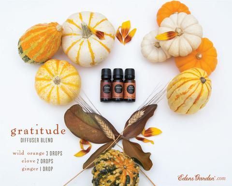 Gratitude Diffuser Blend Recipe Diffuser Blends Ginger Essential Oil Edens Garden Essential Oils