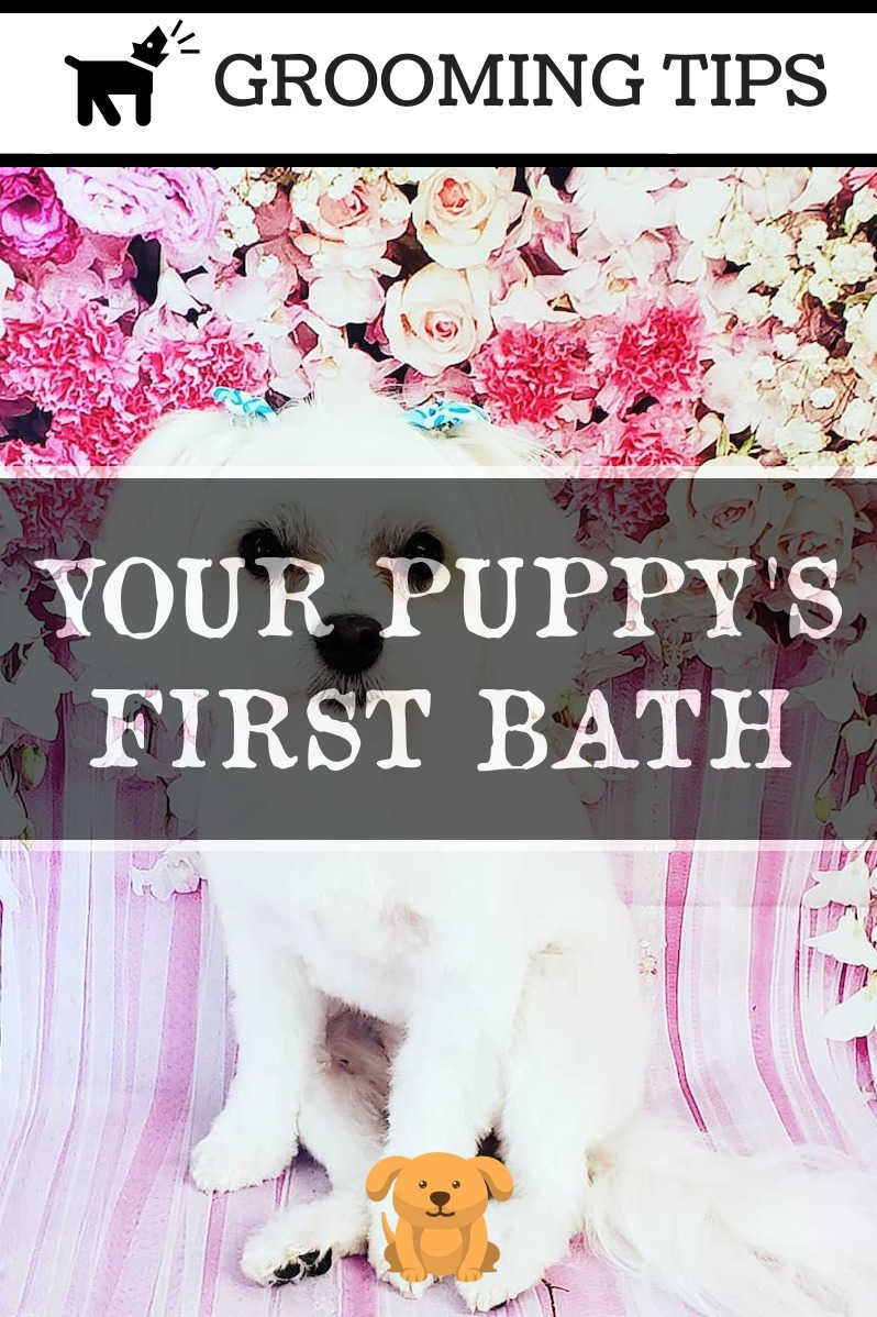 for Home Care Dog grooming, Dog grooming tips, Dog