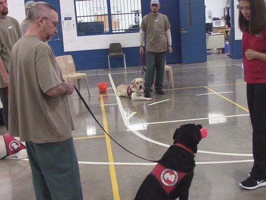 Can Do Canines Puppies In Prison Training Service Dogs Dog