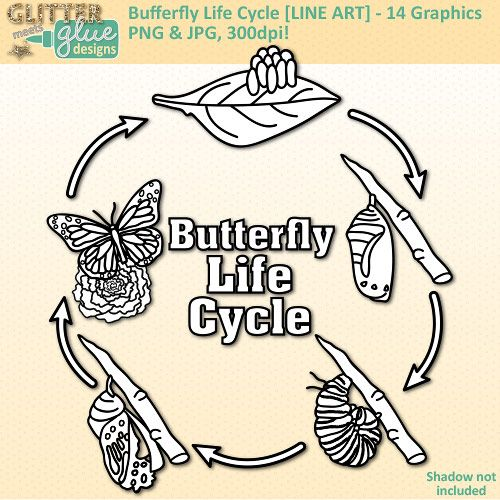 biological cycles essay Ap® biology 2011 scoring guidelines form b the cell cycle is fundamental to the reproduction of eukaryotic cells (a) describe the phases of the cell cycle.