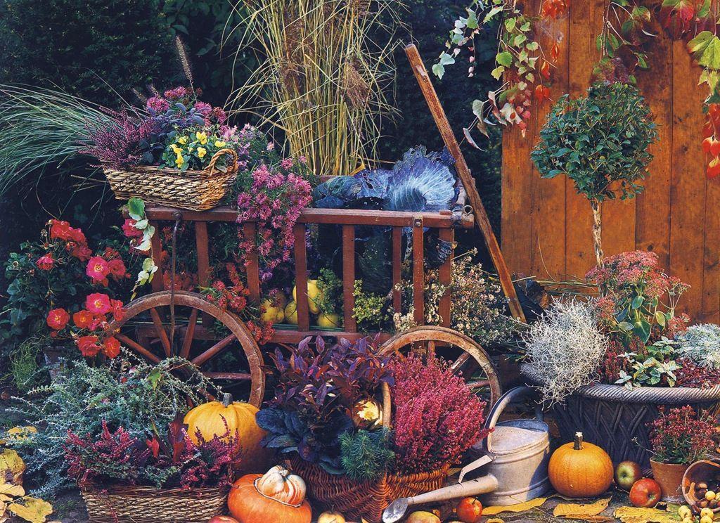 осенний сад - Поиск в Google