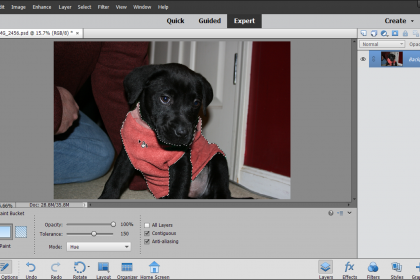 The Paint Bucket Tool In Photoshop Elements Instructions Photoshop Elements