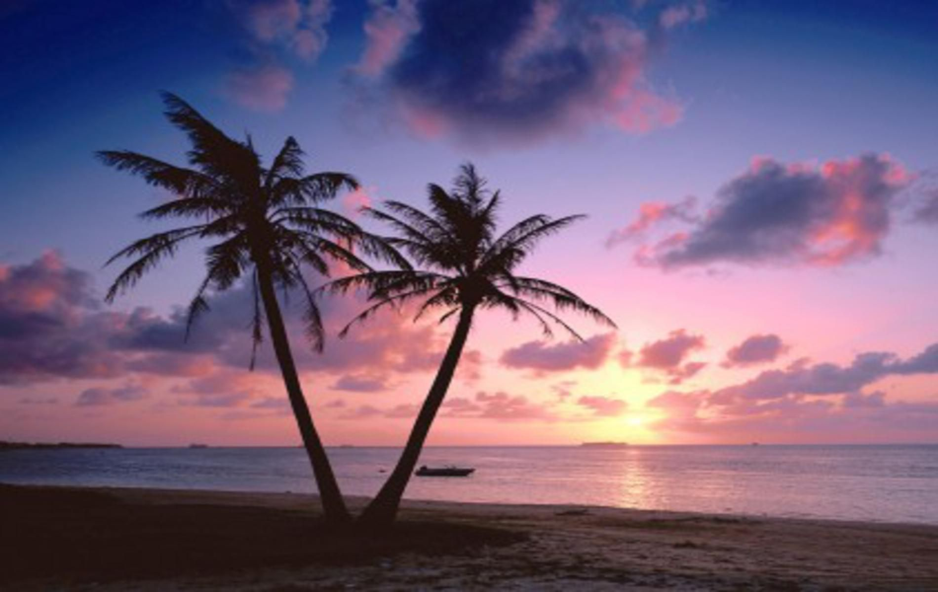 Related Paintings Sunset Landscape Beach Palm Tree