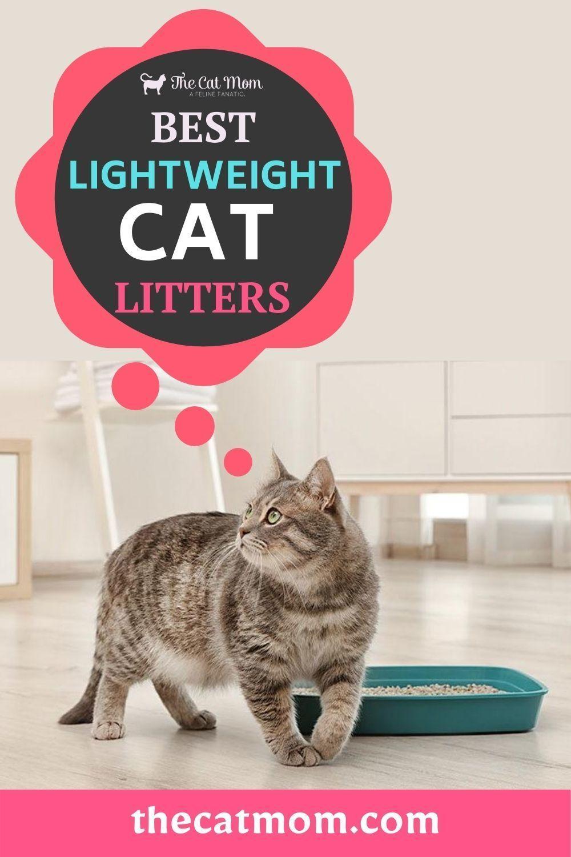 5 Best Lightweight Cat Litters in 2020 Best cat litter