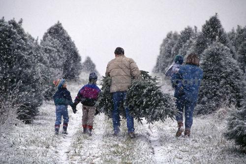 Mcpherson Tree Farm In York Pennsylvania Christmas Spirit
