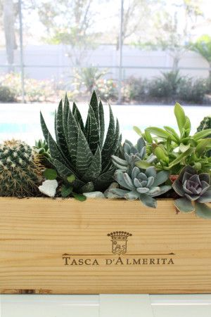 Florida patio and yard tour wooden wine boxes succulent for Wooden wine box garden