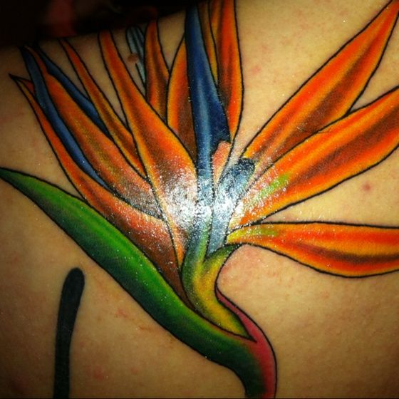 Bird Of Paradise Flower Tattoo Meaning But Bird Of Paradise Flower In Paradise Tattoo Flower Tattoo Meanings