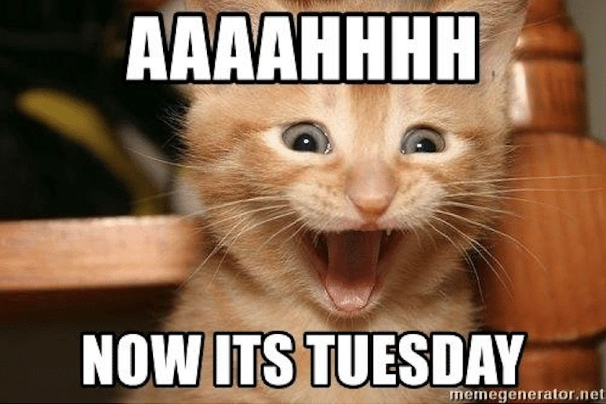 15 Happy Tuesday Memes Best Funny Tuesday Memes In 2021 Funny Friday Memes Happy Tuesday Quotes Happy Tuesday