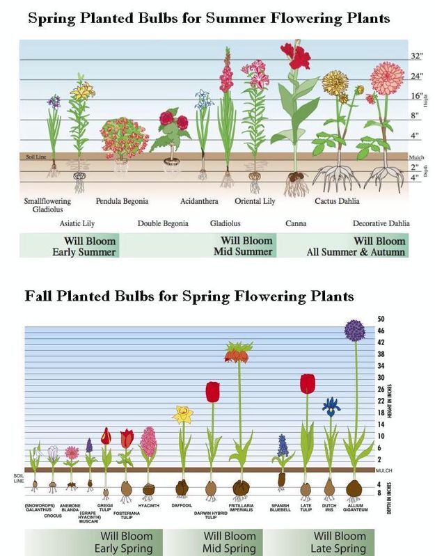 How To Plant A Bulb With A Drill Shawna Coronado Spring Bulbs Garden Planting Bulbs Garden Bulbs