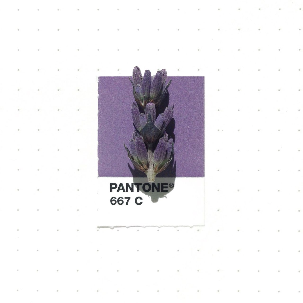 Uncategorized Colors That Match With Lavender tiny objects meet their perfect pantone matches lavender flowers matches