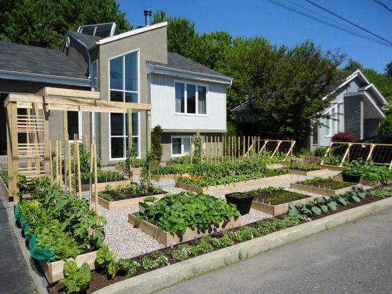 Delicieux Give Peas A Chance Protest Saves Front Yard Vegetable Garden Until Fall  (please Sign The Petition Quebec, Let Homeowners Have Kitchen Gardens! Its  Right ...