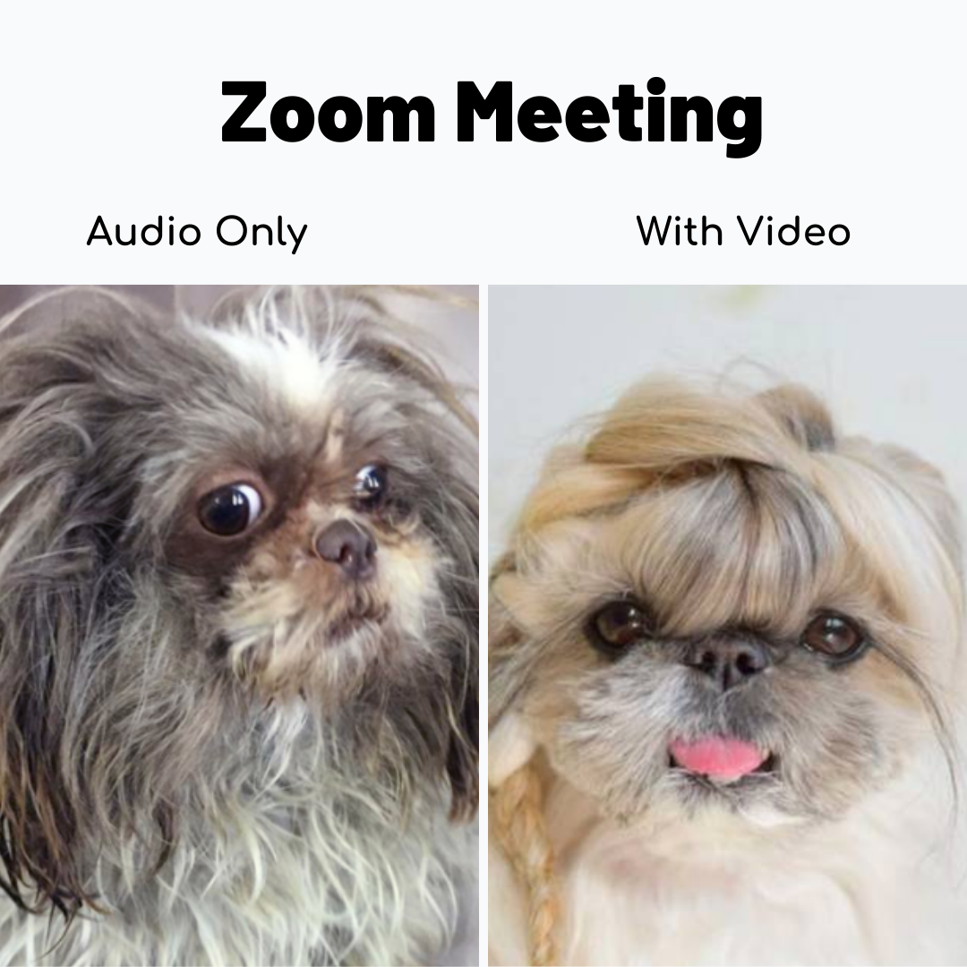 Zoom Meeting Audio vs Video in 2020 Funny minion memes