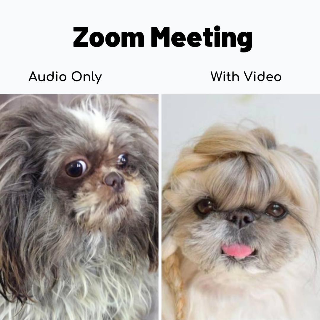 Zoom Meeting Audio Vs Video Dumb Funny Jokes Crazy Funny Memes Funny Minion Memes