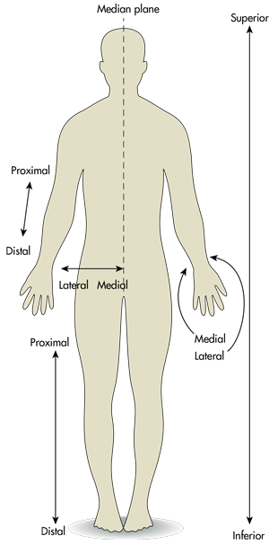 The Difference between Medial and Lateral, Proximal and ...