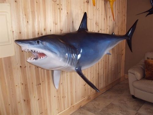 Mako shark fish mount 105 two sided wall mount fish for Mount this fish company