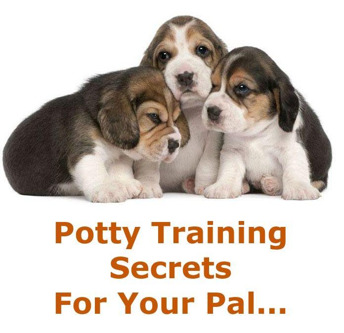 Doggy Dan's Kind & Gentle Dog Training Method Beagle