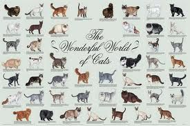 Cat breeds chart veterinary pinterest types of cats cats and
