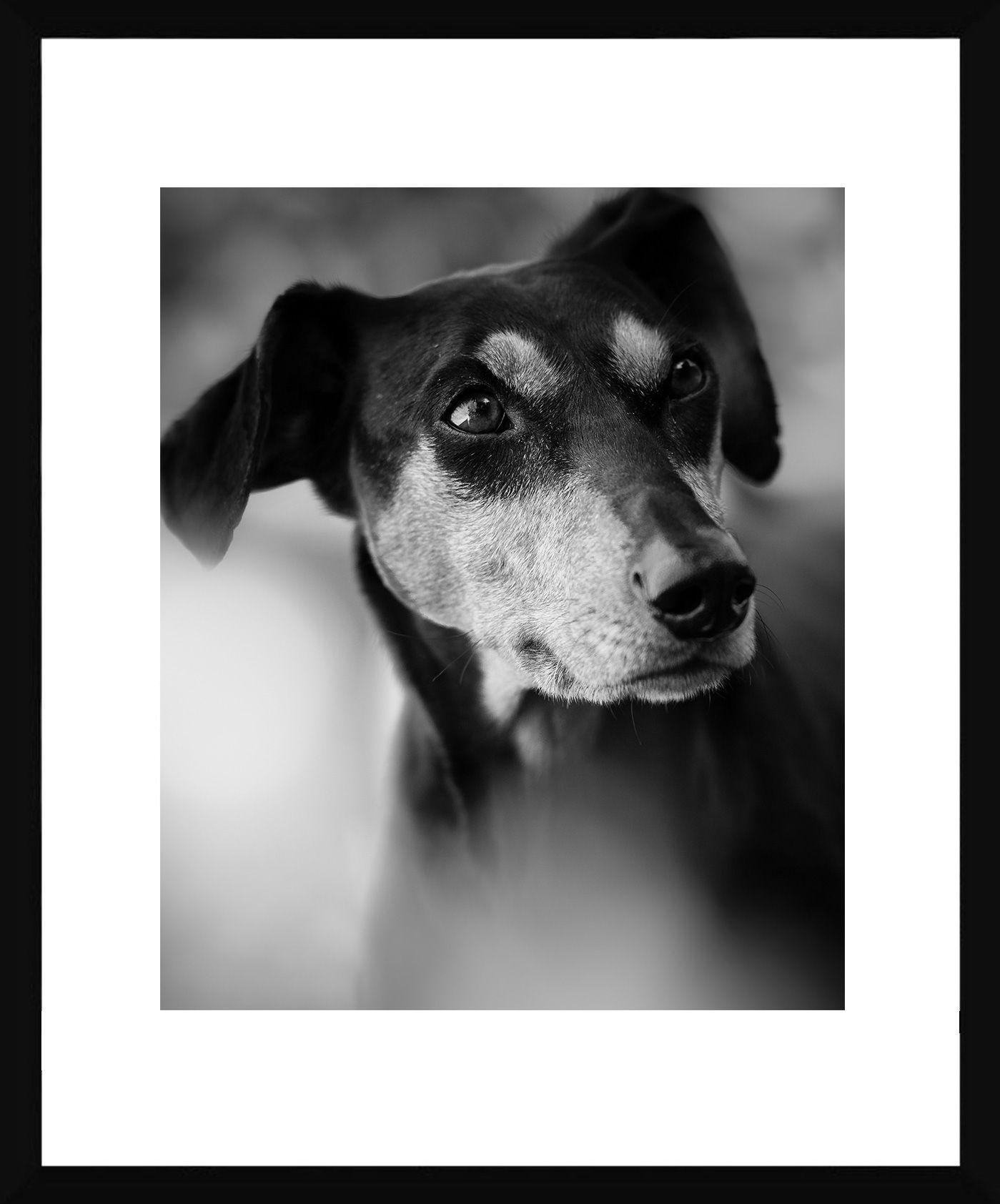 Quadro Decorativo em Preto e Branco Pet Cachorro da Raça Pinscher 50x60cm -  Decore Pronto 809d3e8f5c897