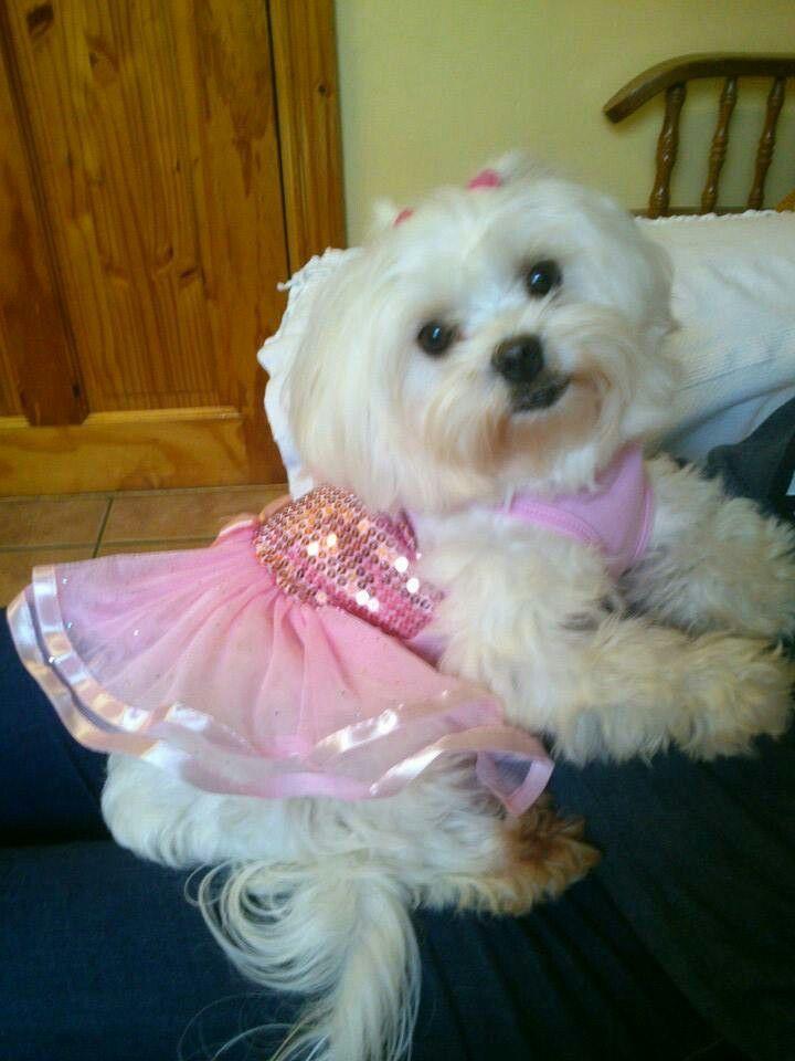 Princess girl Phoebe x